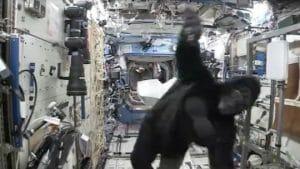 国際宇宙ステーションの船内にゴリラが出た!!!