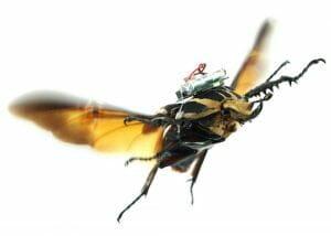 昆虫をサーボーグ化した「昆虫ドローン」登場。見た目はちょっと痛々しい