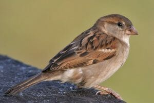 聞いてみたい? ドローンで「鳥の歌」を集める研究が開始
