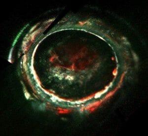 木星オーロラのエネルギー源に新観測 40万ボルトの電子 探査機ジュノー