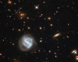 ハッブルが捉えた銀河団「SDSS J0333+0651」