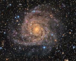 その渦巻きは隠れている様に暗く淡い「IC 342」