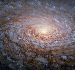 銀河に咲く向日葵に例えられた銀河