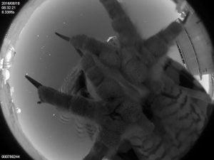 夜の天文台に空からの訪問者、その正体は……?