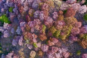 オンライン花見をしよう。4Kドローン撮影の日本全国の美しい桜を公開