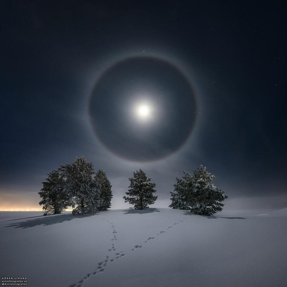 雪原と雪に覆われた木々の上に輝く月のハロー(月暈)(Credit: Göran Strand)
