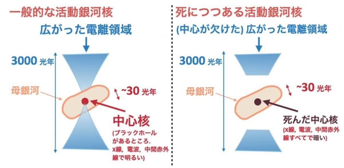 一般的な活動銀河核(左)と死につつある活動銀河核(右)の比較。一般的な活動銀河核では中心核と電離領域の両方が明るく輝くが、死につつある活動銀河核では電離領域だけが明るく輝く(Credit: Ichikawa et al.)