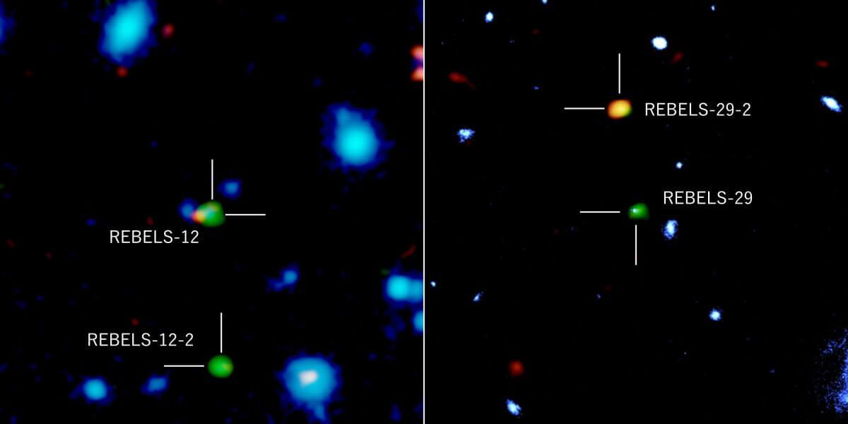 今回見つかった「REBELS-12-2」(左画像の下部)と「REBELS-29-2」(右画像の上部)の観測結果。ハッブル宇宙望遠鏡・VISTA望遠鏡による近赤外線(青)、アルマ望遠鏡による塵(オレンジ)と炭素イオン輝線(緑)の観測データを重ね合わせたもの。「REBELS-12」(左画像)と「REBELS-29」(右画像)では近赤外線が検出されているが、今回見つかった2つの銀河では検出されていない(Credit: ALMA (ESO/NAOJ/NRAO), NASA/ESA Hubble Space Telescope, ESO, Fudamoto et al.)